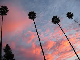 palm trees sunset tumblr. Palm Tree Sunset 4 (tiarescott) Tags: Trees Skyline Losangeles Scottfav Tumblr T