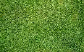 grass texture hd. Contemporary Texture Grass_texture_01 Download Grass Texture And Texture Hd T