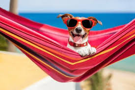 So Kann Man Die Heißen Tage Und Trägen Sommerabende Richtig Genießen