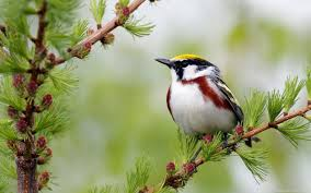 birds wallpaper. Exellent Birds Birds Wallpapers 33 Wide HD With Wallpaper A