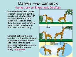 Chapter 15 Darwins Theory Of Evolution Ppt Video Online