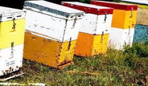 Αποτέλεσμα εικόνας για μελι ληθαιον