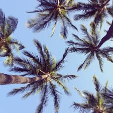 palm trees tumblr. Summer, Sky, And Palms Image Palm Trees Tumblr S