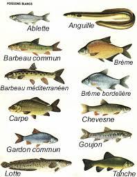 voici les poissons de la classe. - Page 2 Images?q=tbn:ANd9GcT27WcgyBtDyN0WnEcbyKHGS7eJHQi-1Yw_ckNDZNSMb1kOTxYo0Q