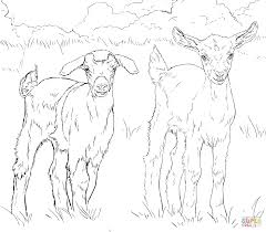 Small Picture Goats coloring pages Free Coloring Pages