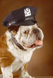 Animal Cop What Courses Are Required To Be An Animal Cop Education