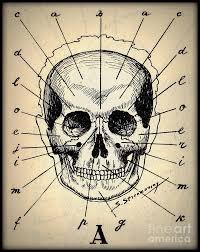 Vintage Medical Human Skull Anatomy Chart