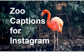134 Instagram Captions For The Zoo