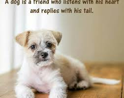 Pet Quotes Beauteous Petquotesanimalquotes Mickys Pet Friendly Georgia USA