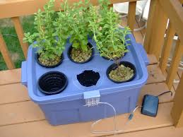 Create Your Own Secret Survival Garden Using a Hydroponic System