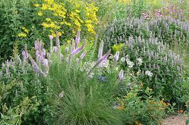 deer resistant gardens prairie nursery