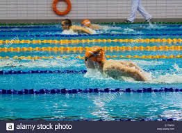 beautiful photo of a swimming pool swimmers in lanes stock image