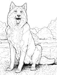 Small Picture Printable 34 Cool Animal Coloring Pages 7758 Husky Coloring