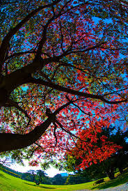 cool colorful nature photography. Perfect Nature Tree Nature And Colors Image On Cool Colorful Nature Photography