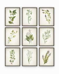 herb wall art beautiful herb print set 9 kitchen herb wall art poster basil