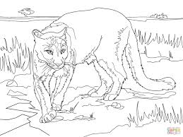 Small Picture Puma Animal Coloring Pages nebulosabarcom