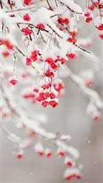 flower wallpapers for iphone 6. Wonderful Wallpapers Winter Fruit IPhone 6 Wallpaper On Flower Wallpapers For Iphone R