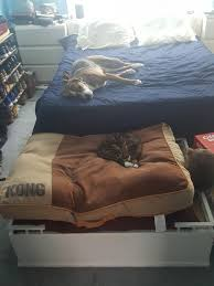 cat stole the dog bed so he stole the people bed