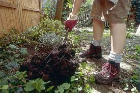 garden manure types and composting tips