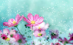 cute flowers images for desktop and mobile