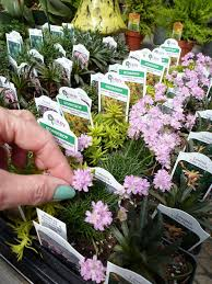 Small Picture Top 25 best Mini gardens ideas on Pinterest Mini fairy garden