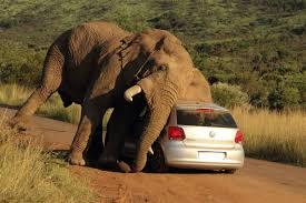 Elephant Auto Insurance Quote Unique Elephant Auto Insurance Quote Comfortable Elephant Insurance Quote