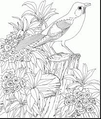 amazing robin bird coloring pages printable with coloring pages ...