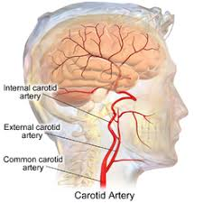 arteries of the face external carotid artery wikipedia