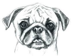 pug coloring pages for s pug coloring pages pug puppy coloring page color pug coloring pages