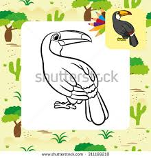 Small Picture Ramphastos Toco Toucan Vector Toco Stock Images Royalty Free