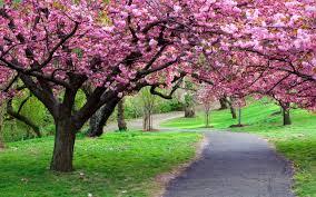 spring tree flower background wallpaper image wallwuzz hd
