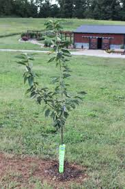 Selecting Fruit Trees For Your HomesteadWhen Do You Plant Fruit Trees