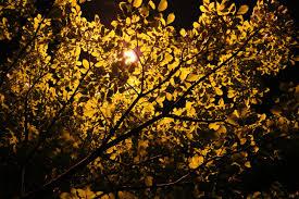 tree branch light plant night sunlight leaf flower autumn lamp yellow flora season night view woody