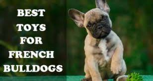 best toys for french bulldogs picture