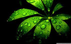 Green Flower Ultra HD Desktop ...