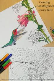 Small Picture Compare Your Hummingbird Coloring Pages to the Original Photos