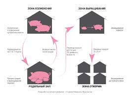 Взгляд изнутри Свинокомплекс com Животноводческий комплекс включает 8 производственных зданий Каждый корпус отвечает за определенный цикл
