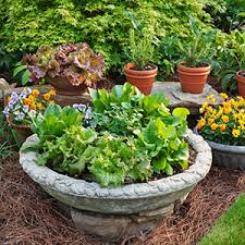 Small Picture Container Gardening Bonnie Plants