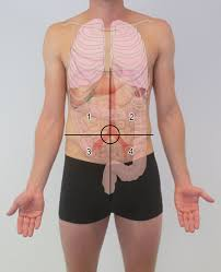 In this image, you will find which internal organ located left upper quadrant, left lower quadrant, right lower quadrant, right upper quadrant in the four abdominopelvic quadrants. Anterior Abdominal Wall Amboss