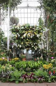 above the tropical orchids cascading from the glass ceilings are members of the largest flowering family on earth more than 30 000 species strong
