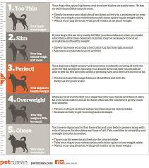 A Chart Of Dogs Body Score Chart For Dogs Petcurean