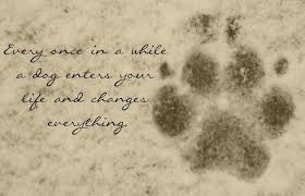 Dog Quotes Inspirational Unique Inspirational Quote Of The Day Augus On Dog Quote We May Have Pets