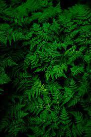 green fern plant photo – Free Image ...
