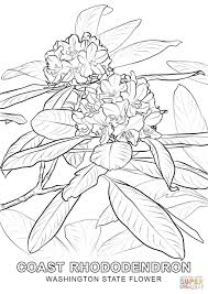 Small Picture Washington State Flower coloring page Free Printable Coloring Pages