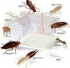 12+ How Many Different Kinds Of Bed Bugs Are There Gif