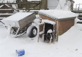 dog house outdoor winter ideas