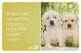 Pet Quotes Simple 48 Pet Quotes That Prove Our Love For Animals