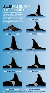tilikum offspring chart. Interesting Tilikum Scottishorca U201c An Old Slightly Outdated Graphic Of The ID Chart For  West Coast Community Not Sure Why Floppyu0027s Sense Direction Is Off In This  And Tilikum Offspring S