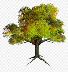 autumn png tree clipart photo
