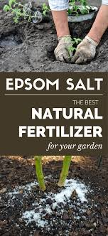 epsom salt gardening. Epsom Salt - The Best Natural Fertilizer For Your Garden GardenTipz.com Gardening .